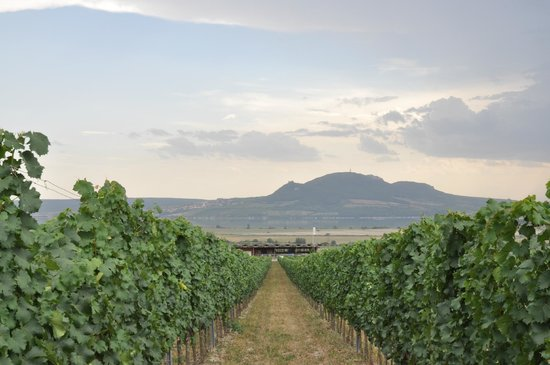 Sonberk:                   Pálava seen from the upper part of the wineyard