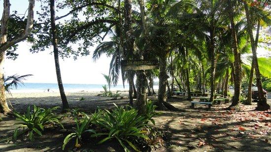 Bucus Tours:                   Beach at Manzanillo