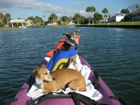 Plantation on Crystal River:                   dogs on kayak, canal next to hotel