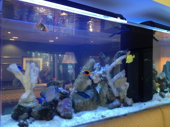 Hampton Inn & Suites Orlando-Apopka:                   Fish tank in the lobby