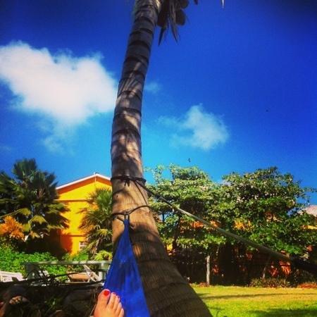 Vega Inn and Gardens:                   from the hammock