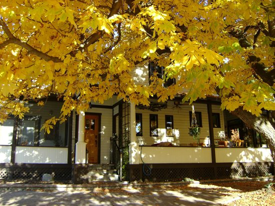 Glenoka Farm Bed and Breakfast: The chestnut in Fall