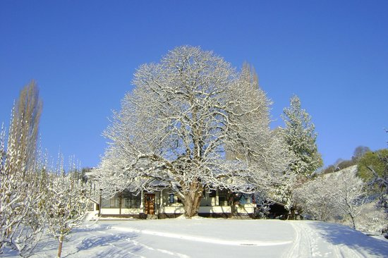 Glenoka Farm Bed and Breakfast: The chestnut in Winter