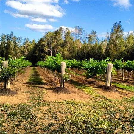 Hungerford Hill Wines Foto
