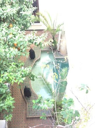 Riad Dar Dialkoum :                   pool from 1st floor