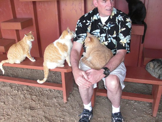 Lanai Cat Sanctuary:                   take a number and get in line to sit on Papas lap