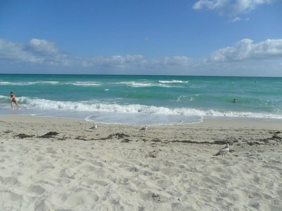 Days Inn Miami Beach / Oceanside: Playa del hotel