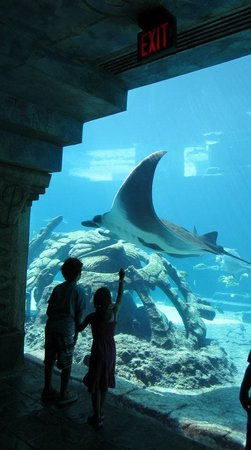 Atlantis, Beach Tower, Autograph Collection:                   Acuario