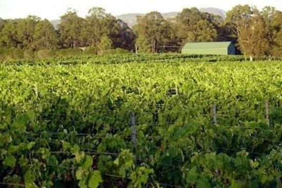 Pokolbin Brothers Wines: Wine grown right here!