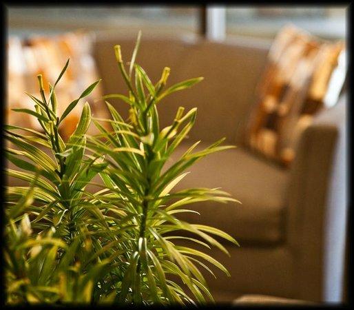 Golden Green Hotel : Be Vegan, Make Pace