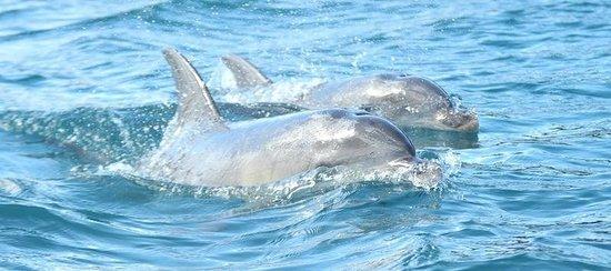 Freycinet Experience Walk Friendly Beaches Lodge: Dolphins at Freycinet