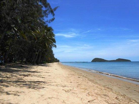 Palm Cove Beach: Palm fringed beach