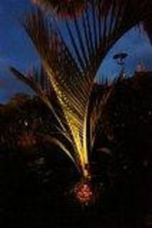 Karin's Garden Villa B&B:                   Beautiful palm at night