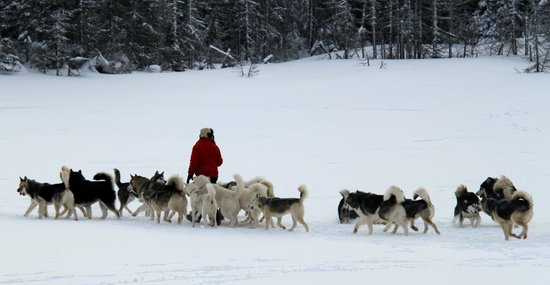 Entre chien et loup (L'Anse-Saint-Jean) - All You Need to