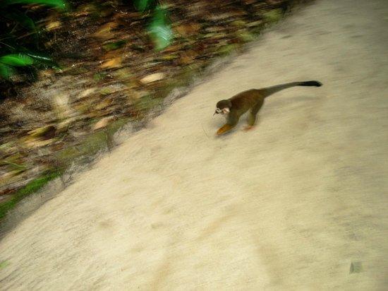 Bosque Rodrigues Alves - Jardim Botanico da Amazonia :                   muitos animais são soltos