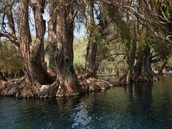 Tangancicuaro, เม็กซิโก: Arboles enmedio del Lago