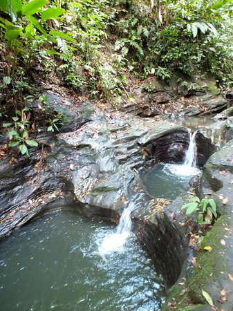 Tiskita Jungle Lodge: Natural Pools - Cool and Refreshing