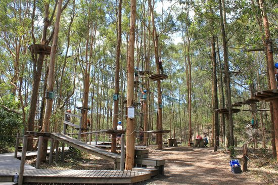 TreeTops:                   Love the flying foxes and the challenges