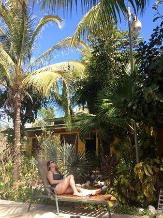 El Mono Loco:                                     disfrutando del sol al lado de la piscina q estan frente a l