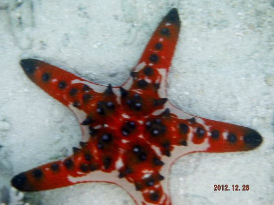 Erakor Island Resort & Spa:                   Starfish