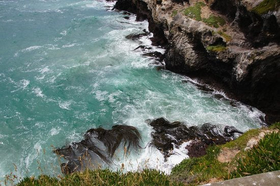 Back to Nature Tours:                   Taiaora headlands, Otago Peninsula.
