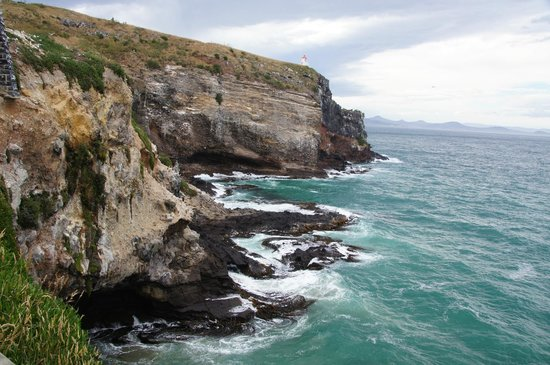 Back to Nature Tours:                   Taiaora Head, Otago Peninsula, seals and birdlife