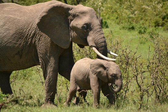 Naboisho Camp, Asilia Africa:                   Wildlife