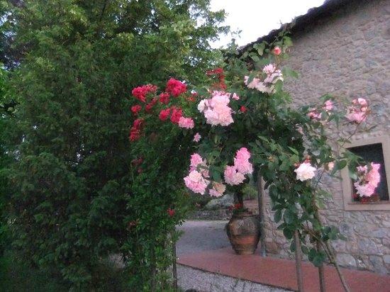Agriturismo Il Castagnolino:                   ancora rose
