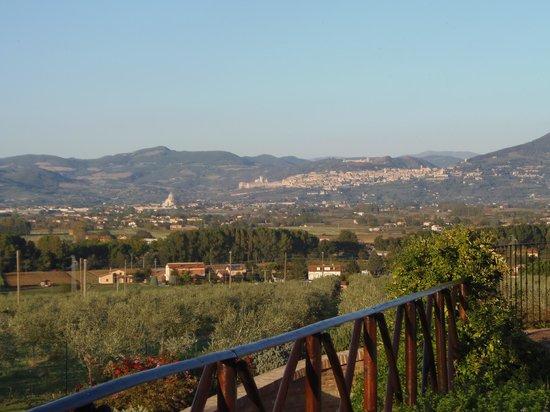 Tenuta Del Perugino:                   panorama con Assisi sullo sfondo                 
