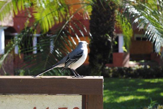 IBEROSTAR Paraiso Del Mar:                   mooie vogels..