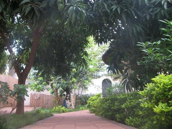 La Venise Malienne: jardin