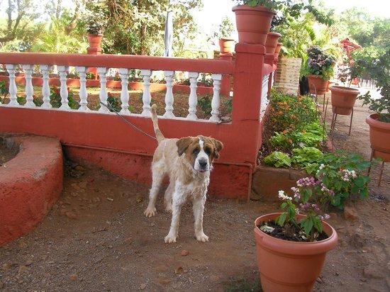 Hotel Uday:                   'SADU HOTEL DOG... PROTECT HOTEL
