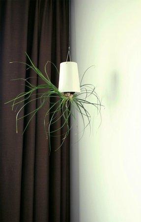 Conscious Hotel Vondelpark:                   Растение