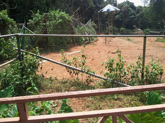 Malacca Zoo:                   torn fences,