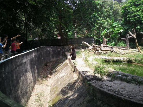 Malacca Zoo:                   sun bear pacing up and down being taunted by visitors