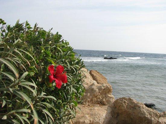 Citadel Azur Resort:                   Уголок пляжа