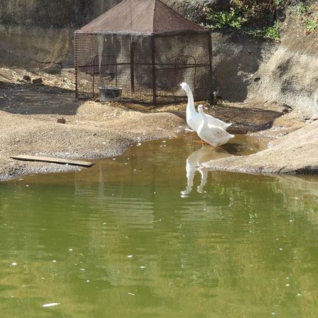 Upper Deck Resort Pvt. Ltd.:                   Duck Pond                 