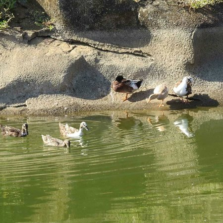 Upper Deck Resort Pvt. Ltd.:                   Duck Pond