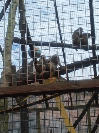 Drayton Manor Park: monkey