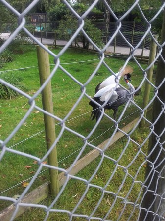 Πάρκο Drayton Manor: these birds dance to you as a way of showing off