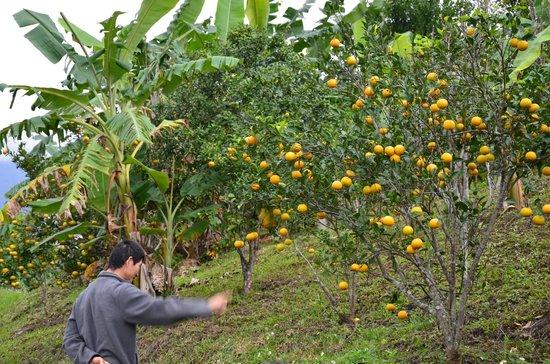 Taiwan Juhu Farmstay: the farm