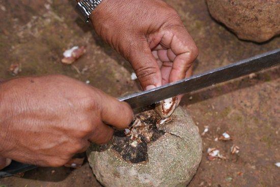 Tariri Amazon Lodge:                                                       Fresh Brazil Nuts