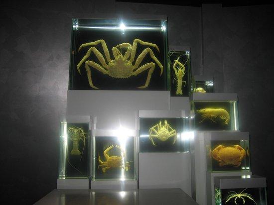 Ozeaneum: Krabben und anderes Getier