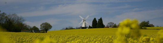 Woodchurch Windmill: View through the oil seed flowers