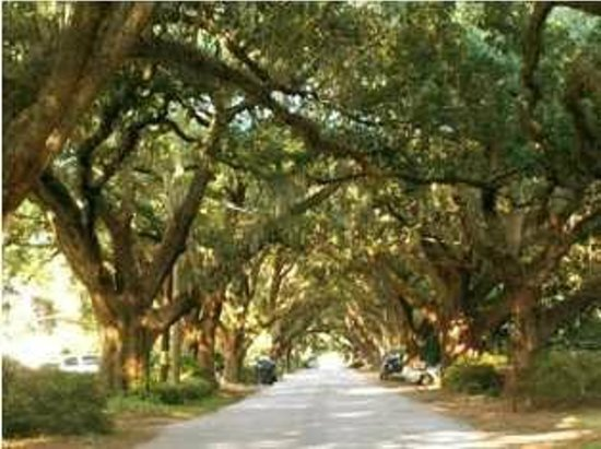 Charleston, Period: Avenue of the Oaks Riverland Terrace