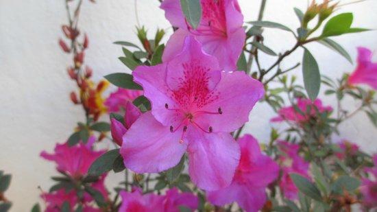 Casa Capuchinas:                   Flores