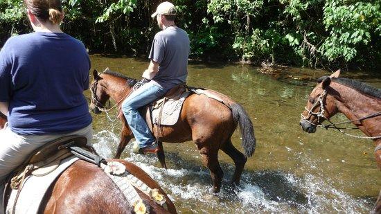Jinetes de Osa Hotel:                   Horse back tour