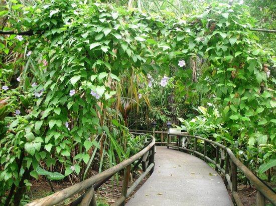 Pachira Lodge:                   giardino