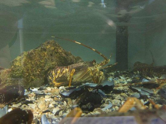 Ristorante Murtarol:                   Lobster