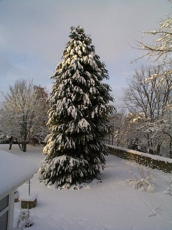 Columba House Hotel: A Snowy Tree in the Garden